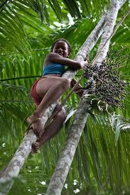 Meisje dat in een acai boom klimt