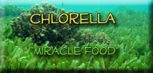 Chlorella miracle food