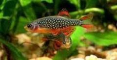 Baby fish in an aquarium