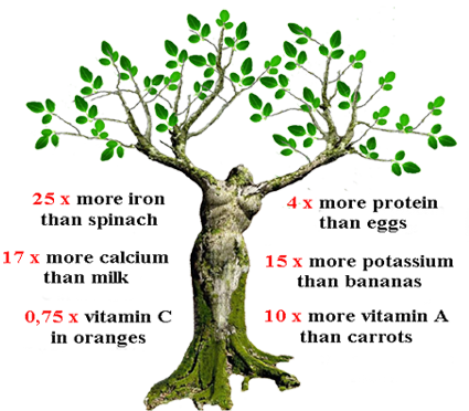 Tree with around listed the benefits of Moringa