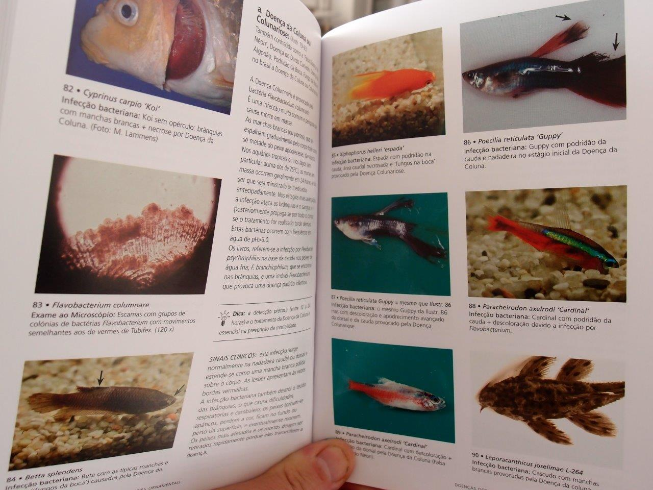 Brazilian book The Practical guide to fish diseases opened