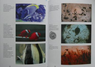 page2 livre maladies des poissons marins en aquarium